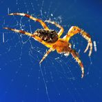 Nur eine Spinne im Herbstlicht