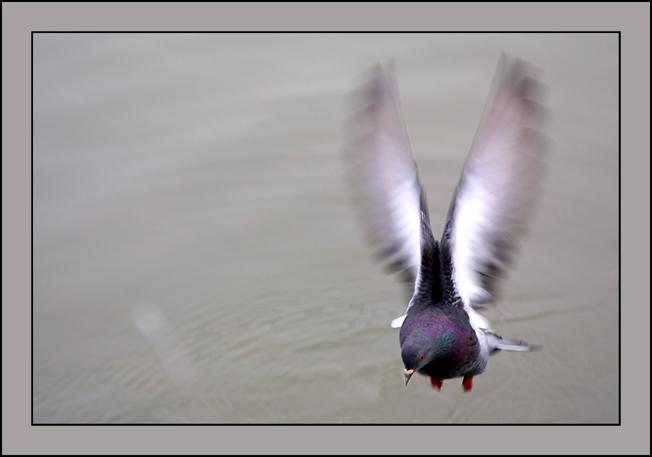.........nur eine Taube !