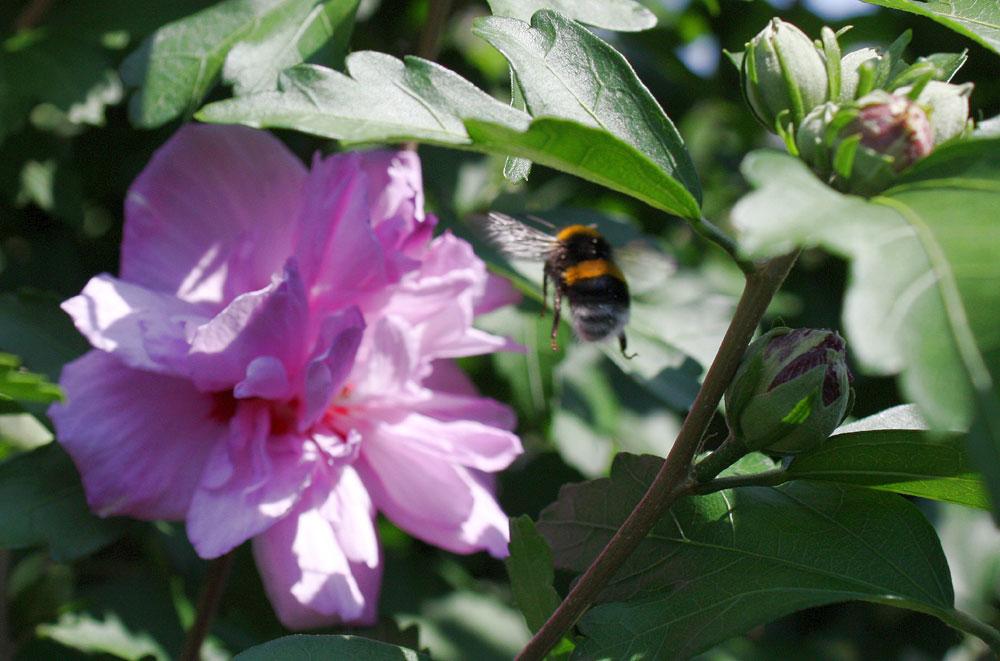 nur gut, dass Bienen nicht streiken