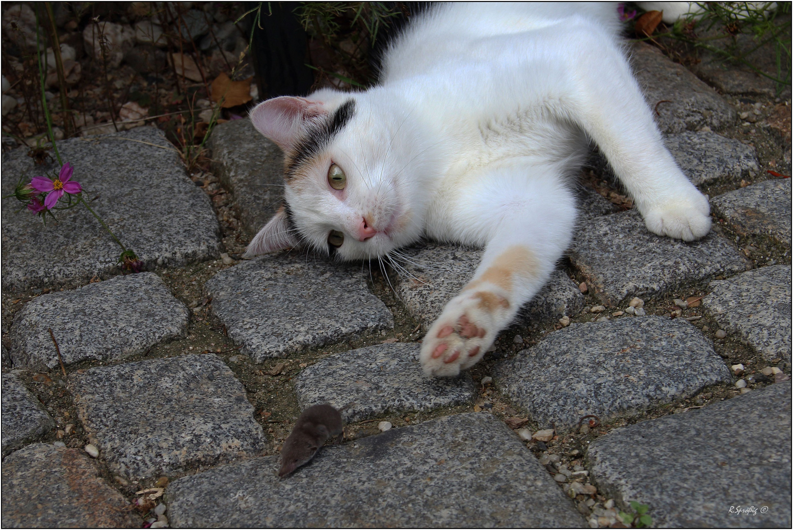 - nur mal Katz & Maus spielen -