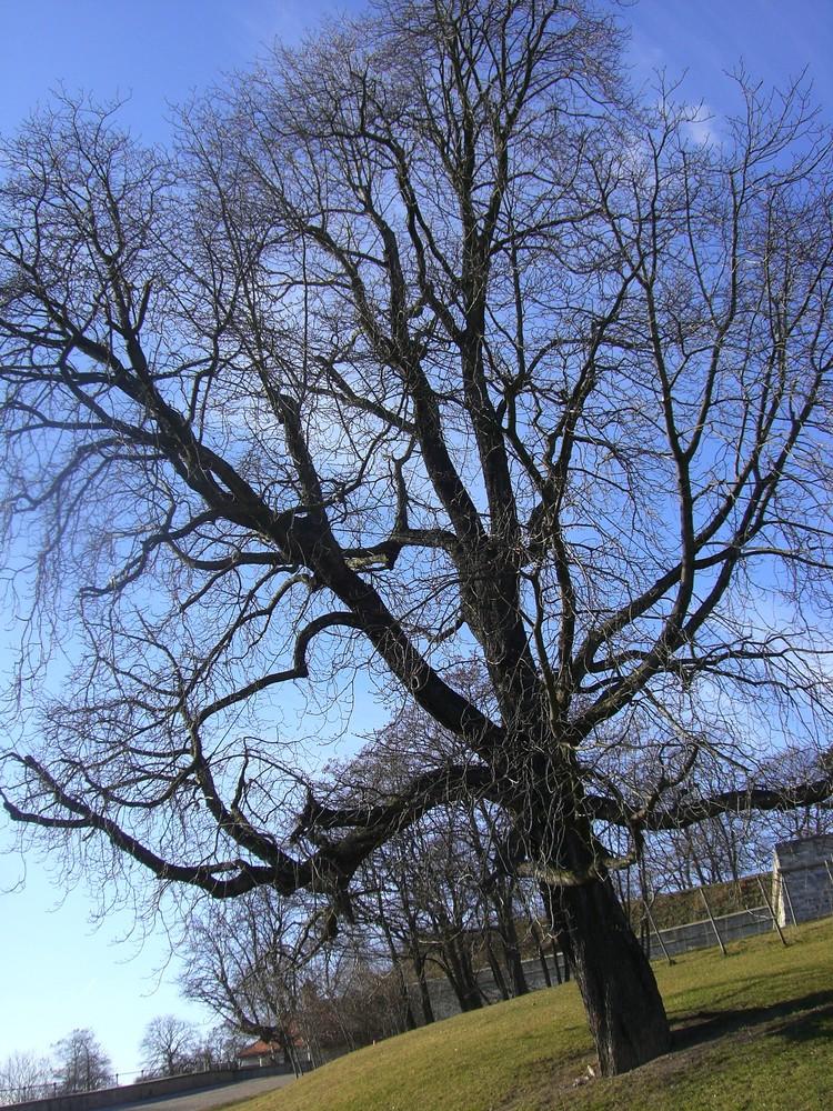 nur n Baum