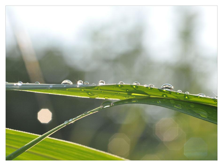 ... nur nach Regen. (I)