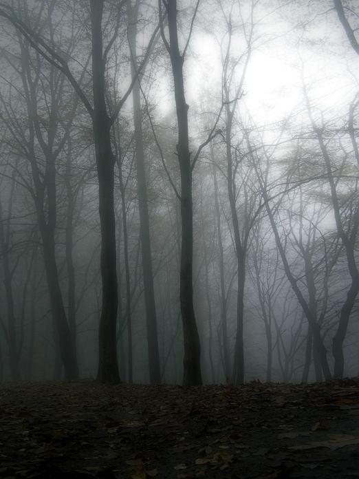 nur nicht allein in den Wald ;-)
