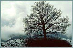 ... nur noch ein Hauch von Winter