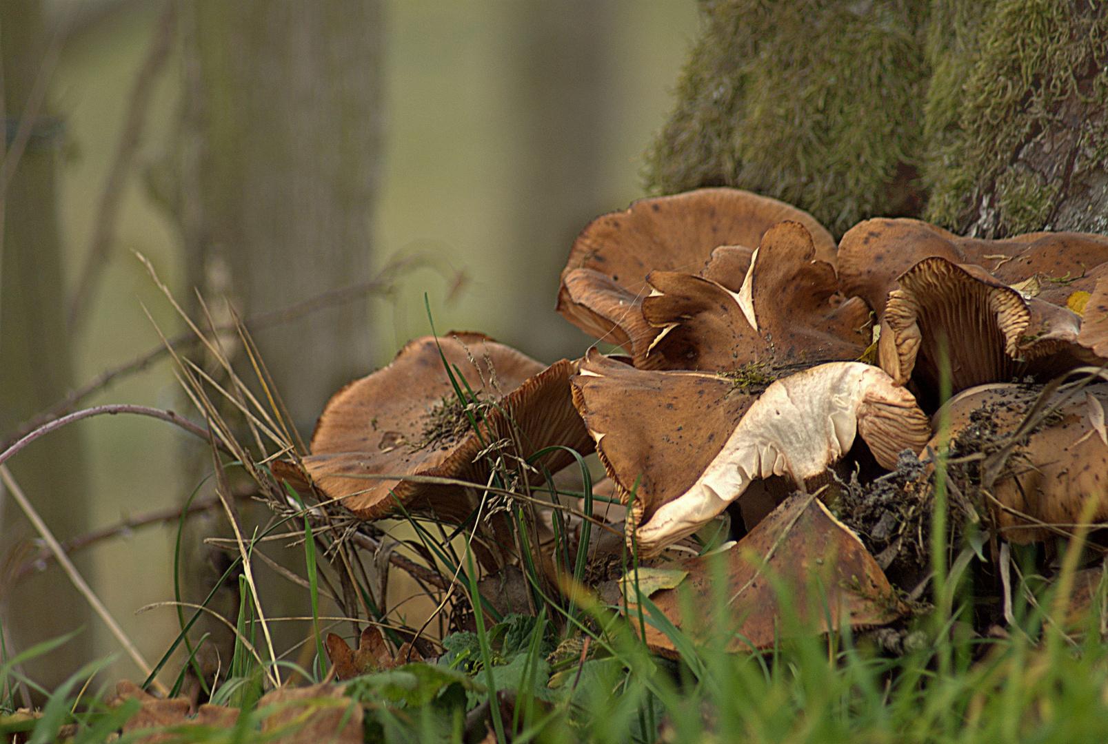 Nur Pilze...