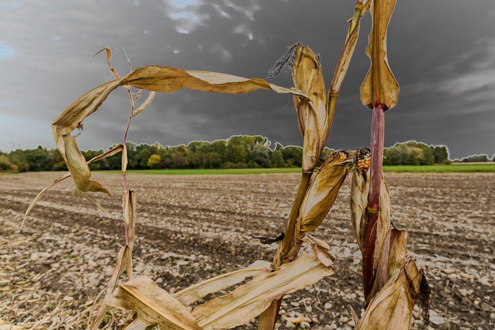 Nur wenige überlebten das Erntemassaker
