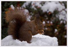 Nussknacker im Schnee