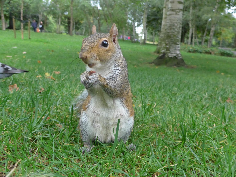 Nuts?