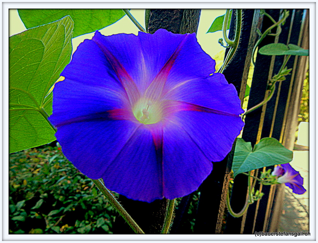 """NYC """"Flower in Central-Park."""""""