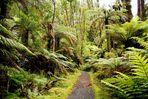NZ Denk´ ich an Neuseeland...