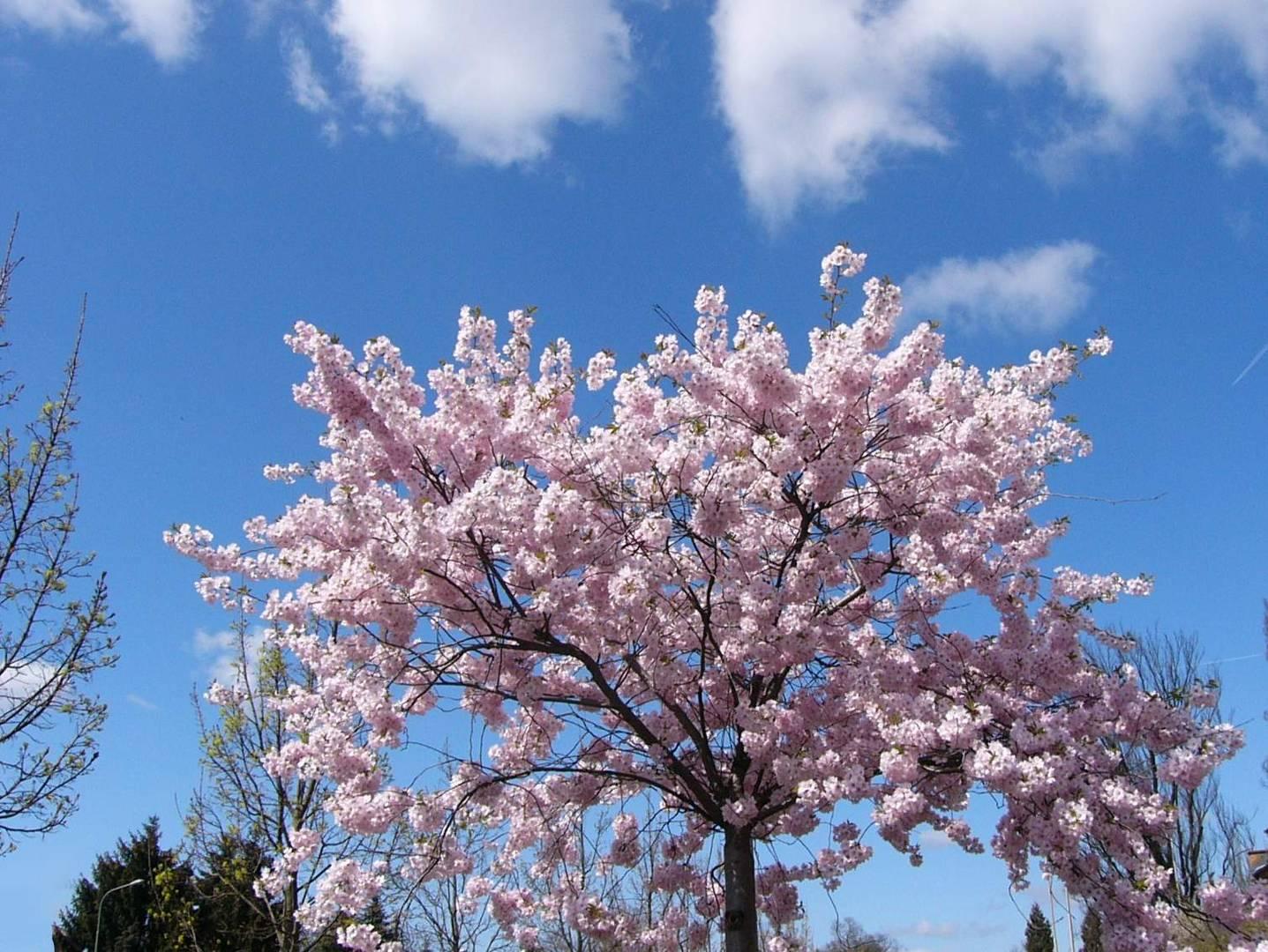 o Frühling wie bist Du so schön