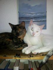 """""""O Sole Miau"""""""