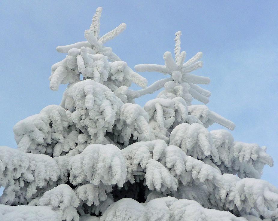 o tannenbaum o tannenbaum foto bild jahreszeiten winter harz im winter bilder auf. Black Bedroom Furniture Sets. Home Design Ideas