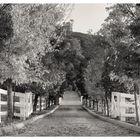 Oak Glen Drive