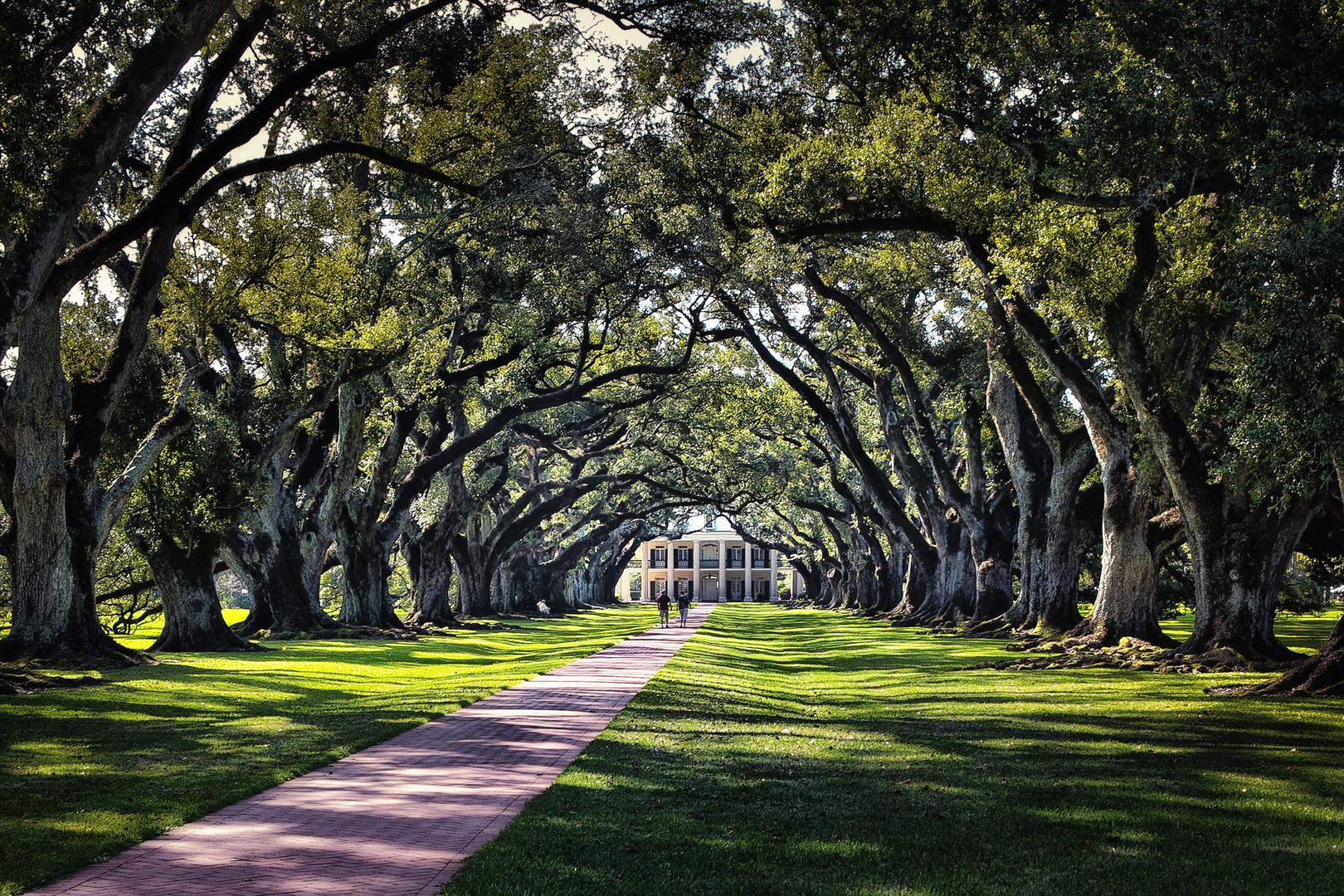 Oak Halley Plantation