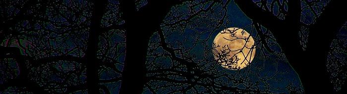 Oaken Moon