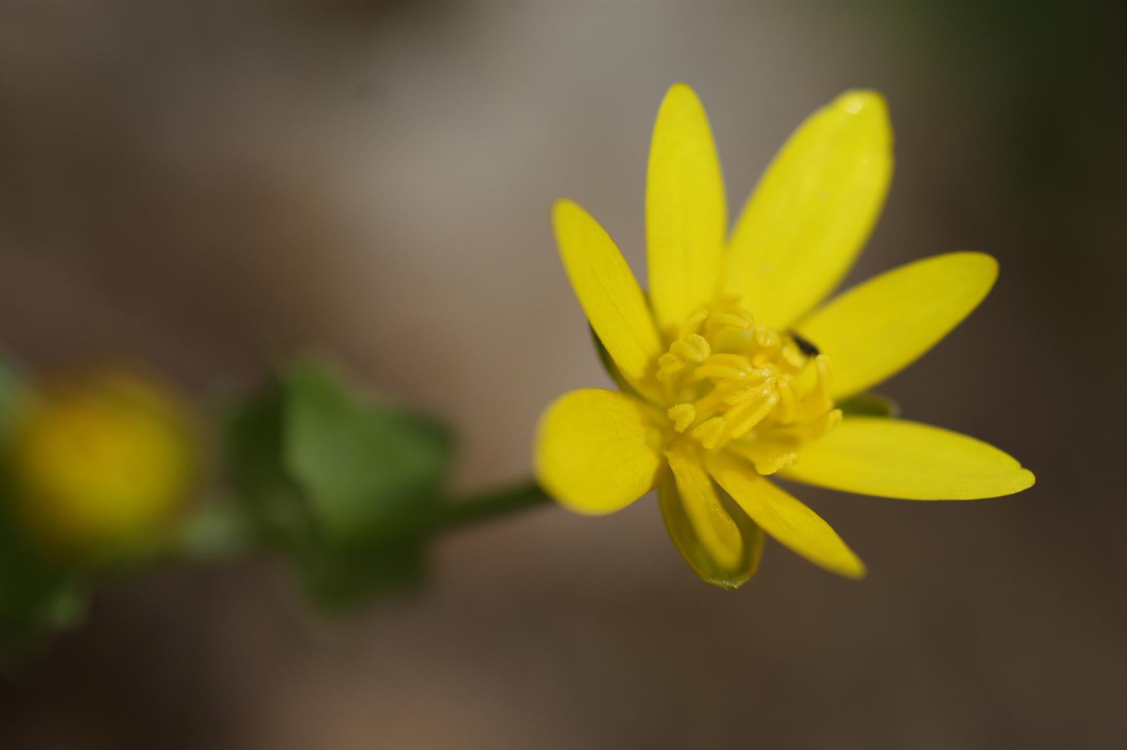 Oase in gelb...