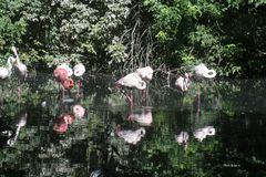 Oasi di Sant'Alessio - Fenicotteri rosa