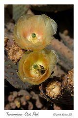 Oasis Park - Cactus Garden