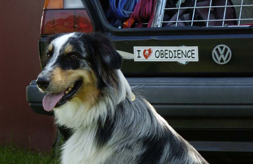 Obedience 1
