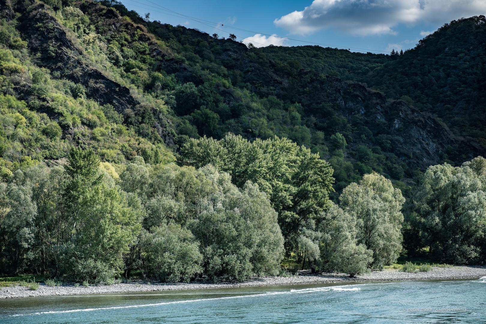 Oberes Mittelrheintal - Flußuferlandschaft (2)