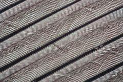 Oberflächenprofil einer Vogelfeder ca. 400x vergrößert