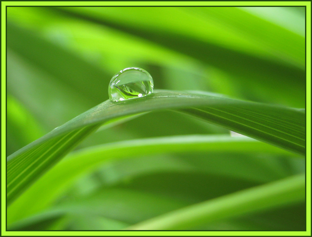 Oberflächenspannung in Grün