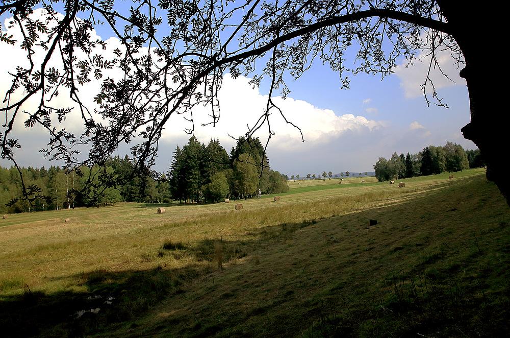 Oberharzer Bergwiese
