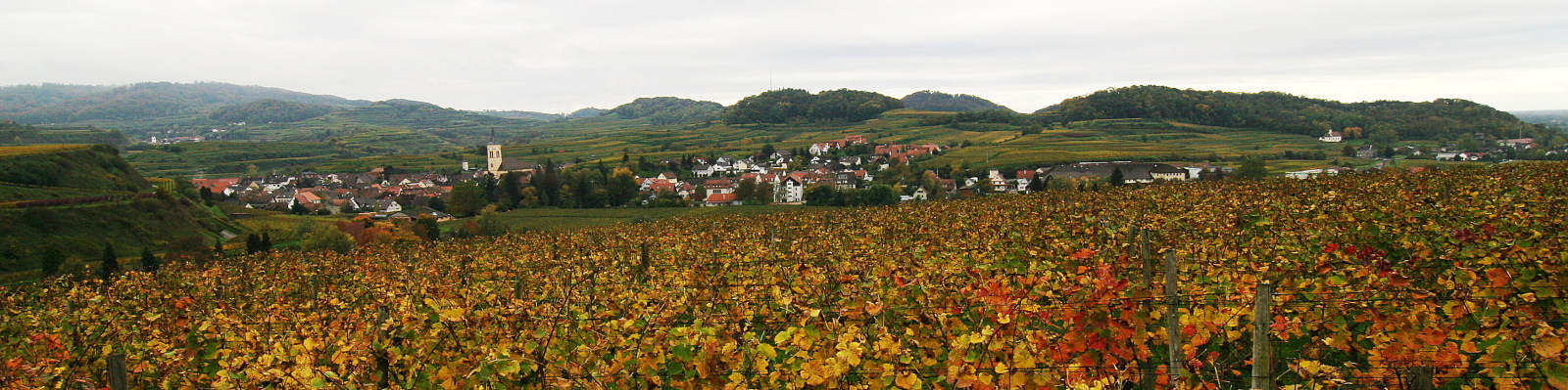 Oberrotweil - Kaiserstuhl