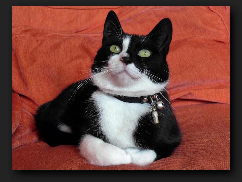 Observation cat