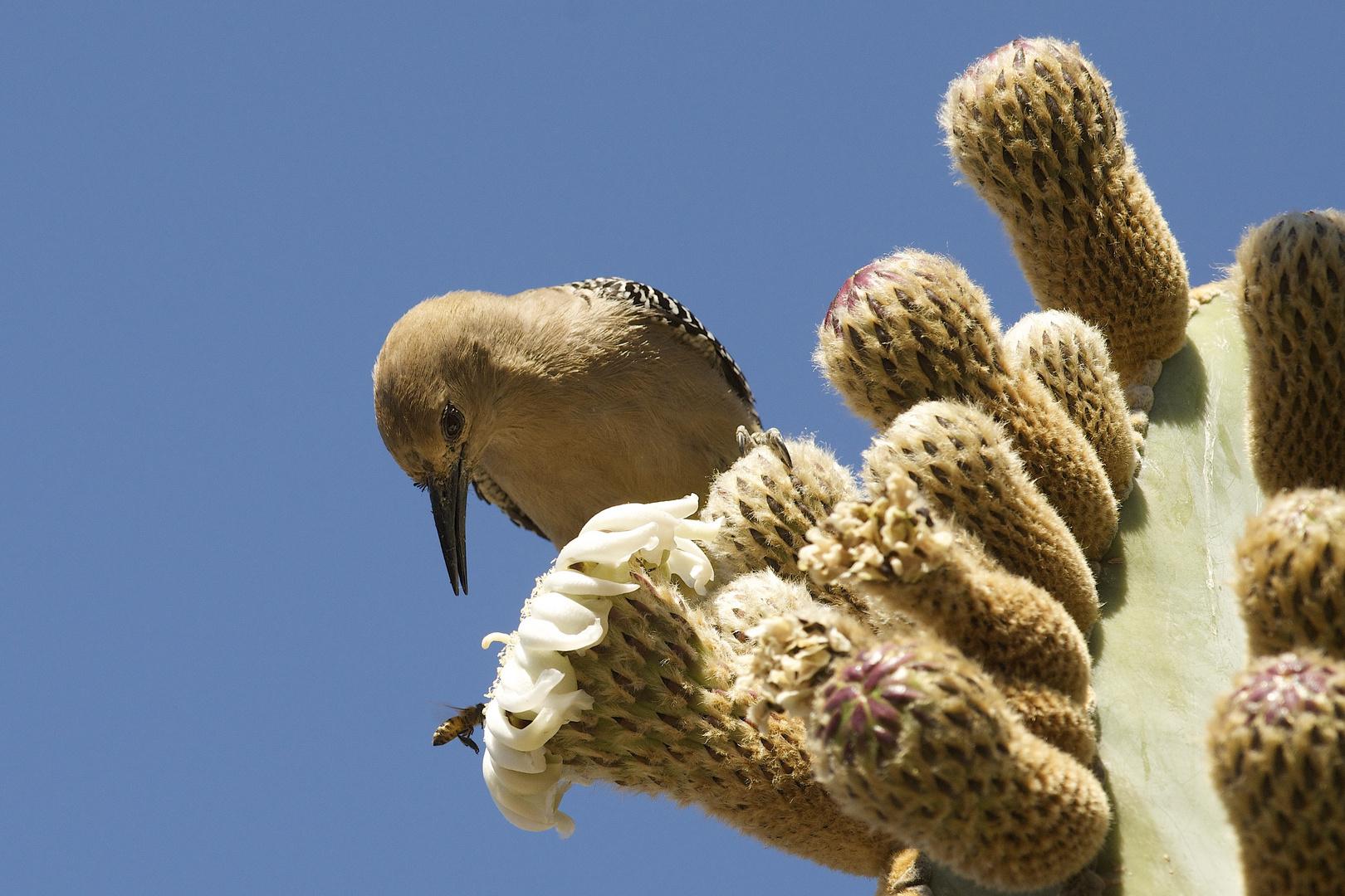 Observing Woodpecker