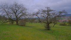 "Obstbäume am Hutsberg (frutales en la montaña ""Hutsberg)"