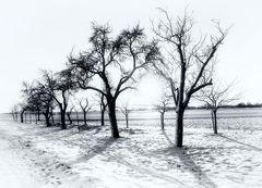 Obstbäume im Winter - Wiesbaden Bierstadt