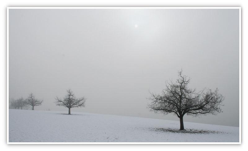 Obstbäume in Melancholie