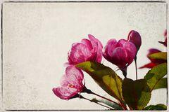 Obstblüte im Gegenlicht