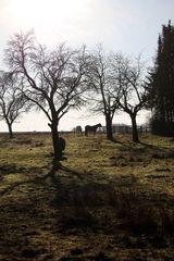 obstgarten und pferdewiese in einem