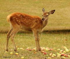 Obsttag  bei den Hirschen