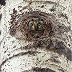 Occhi di bosco