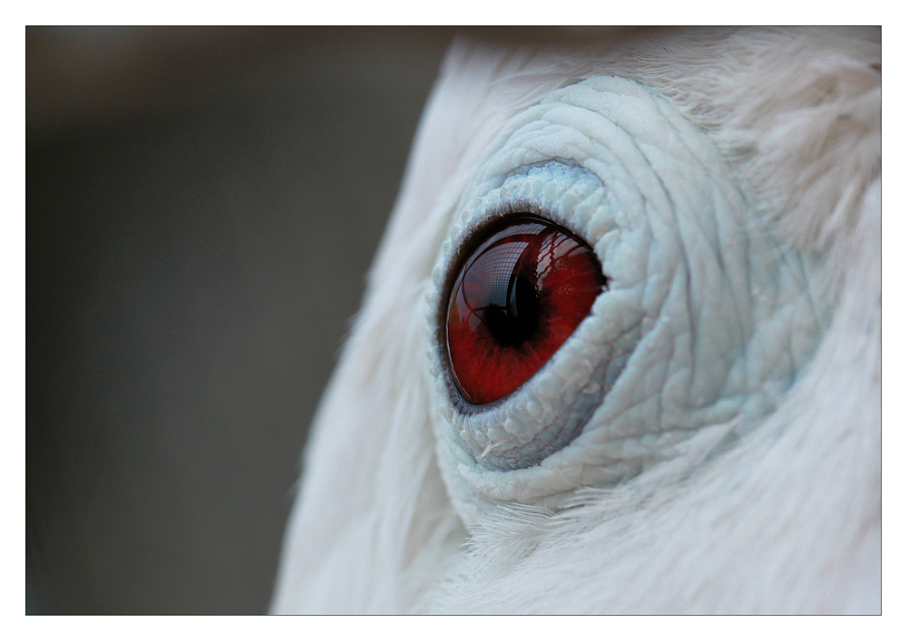 occhi rossi