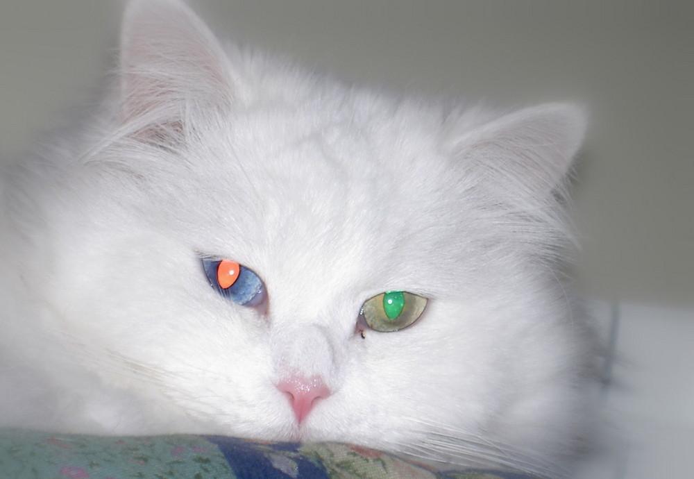 Occhi....di gatto....