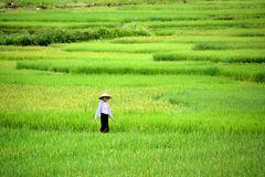 Océan de rizières