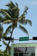 [ ocean drive ]