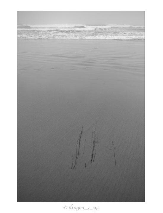 Ocean Weeds