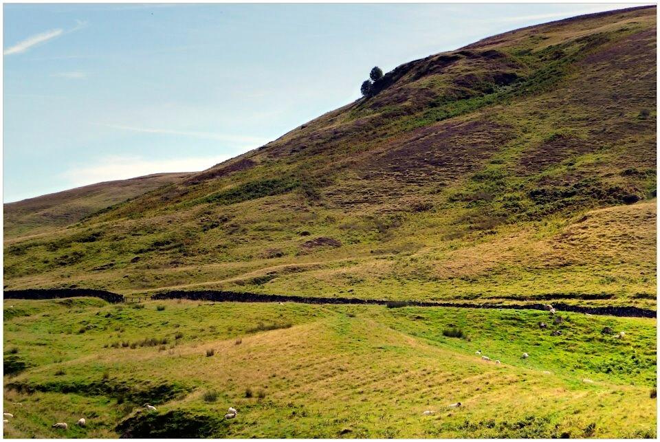 Ochil Hills