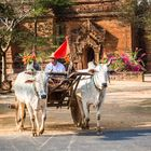 Ochsenkarren vor einem Tempel in Begann