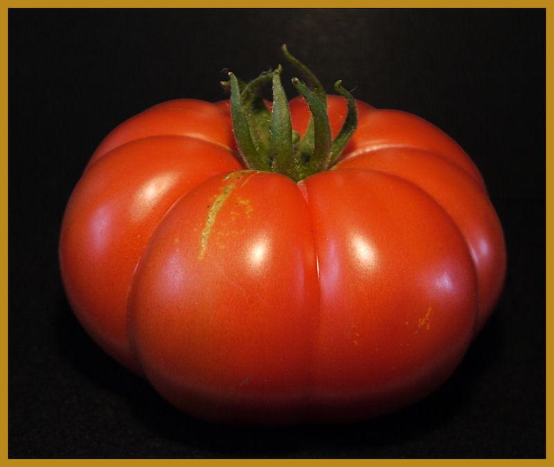 Ochsenkopf-Tomate