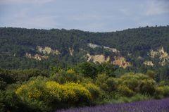 Ocker, Ginster, Lavendel