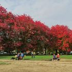 October in Vancouver (3)