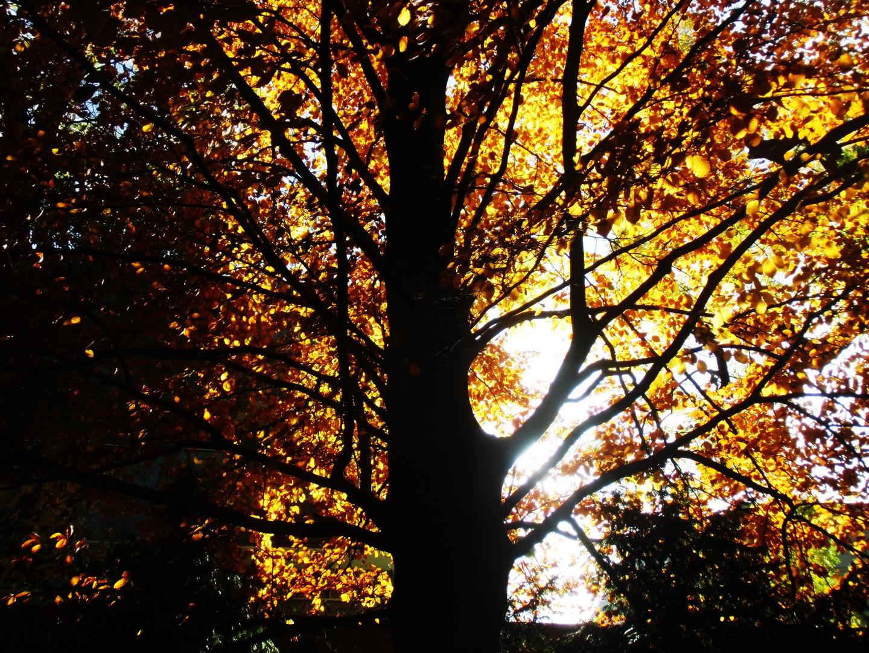 October melancholy