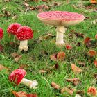 October - un temps pour les champignons